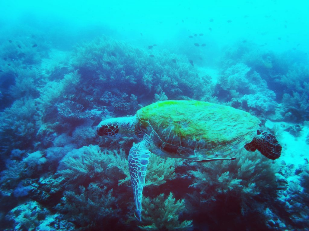Diving Sea Turtles