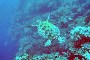 Dive Sites Panglao