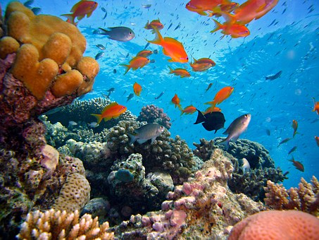Coral Reef Diving Philippines