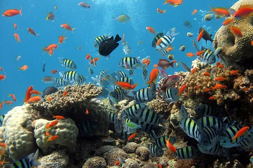 coral diving black forest
