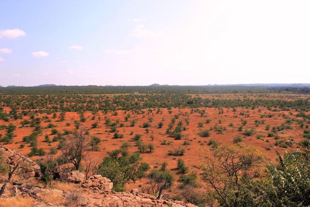 African Bush Scenery