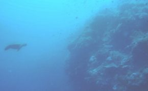Dive Guide: 3 Magical Dive Sites In Panglao