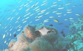 Why I Love Budget Diving (And You Should, Too!)