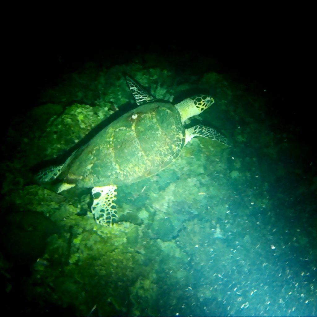 Nightdive Turtle