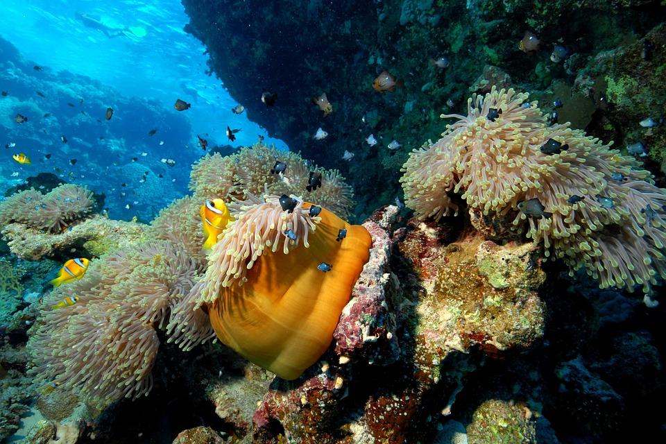 Thailand Scuba Diving