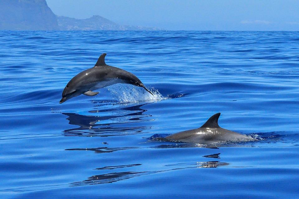 Dolphin Watching Takalana Bay