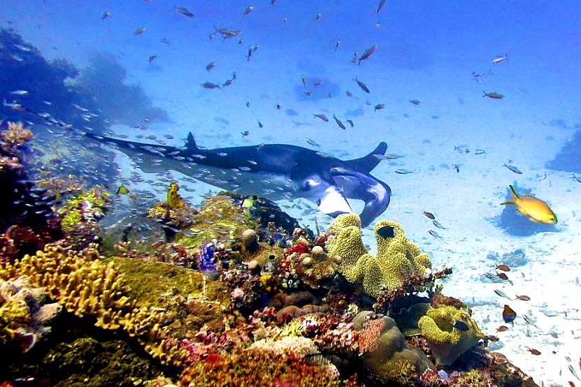 Diving in Komodo, Indonesia
