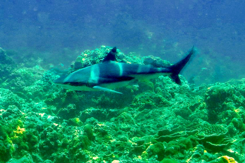 Diving in Phuket, Thailand