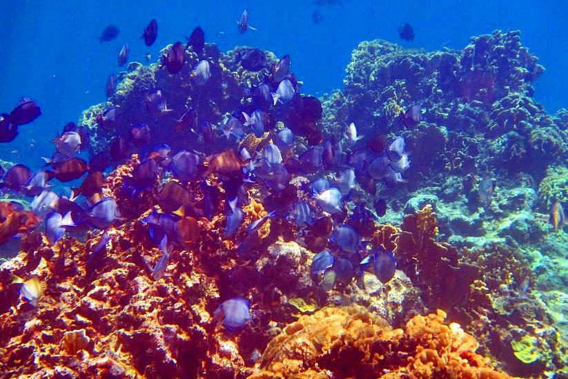 Diving In Roatan, Honduras