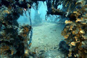 Dive Guide Utila